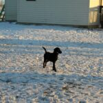 Gun Dog training at our facility